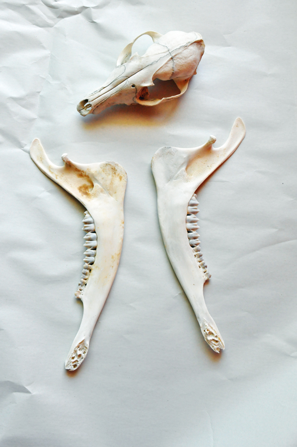 bones.after
